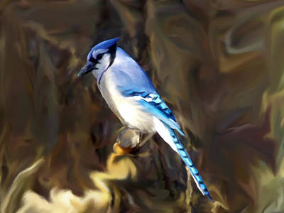 Blue Jay Poster by Dennis Buckman