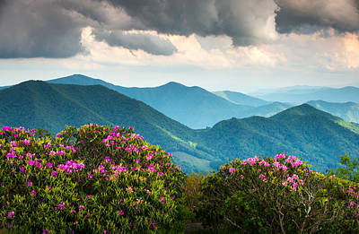 Blue Ridge Appalachian Mountain Peaks And Spring Rhododendron Flowers Poster by Dave Allen