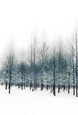 Blue Trees Poster by Michael Huddleston