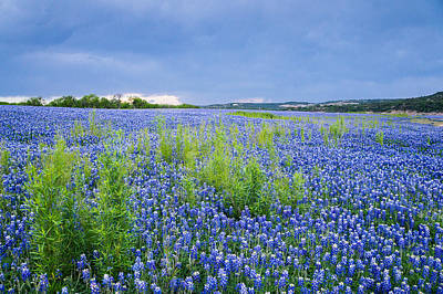 Bluebonnets Under The Storm Clouds - Wildflower Field Poster by Ellie Teramoto