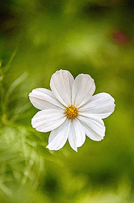 Bohemian Garden White Poster by John Haldane