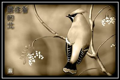 Bohemian Waxwing In Sepia Poster by John Wills