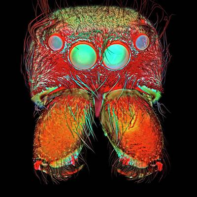 Bold Jumping Spider Poster by Igor Siwanowicz