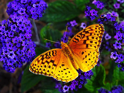 Boothbay Butterfly Poster by Bill Caldwell -        ABeautifulSky Photography