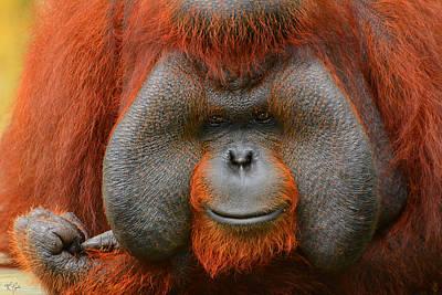 Bornean Orangutan Poster by Lourry Legarde