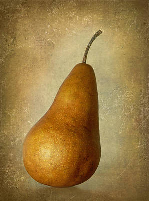 Bosc Pear Poster by Angie Vogel