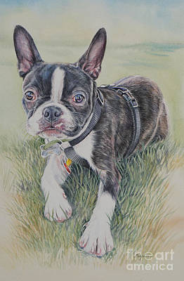 Boston Terrier Puppy Poster by Gail Dolphin
