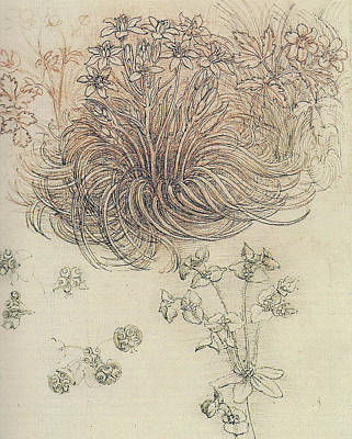 Botanical Study Poster by Leonardo da Vinci