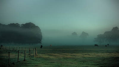 Bovines In The Mist Poster by Chris Fletcher