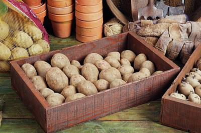 Box Of Potatoes Poster by Geoff Kidd