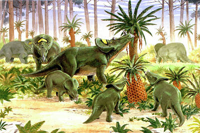 Brachyceratops Dinosaurs Poster by Deagostini/uig