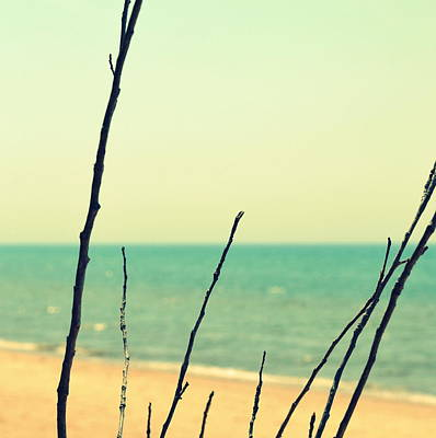 Branches On The Beach Poster by Michelle Calkins