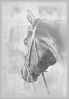 Bridled Horse Waiting Poster by Renee Forth-Fukumoto