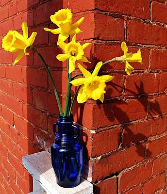 Bright Yellow Daffodils Poster by Chris Berry