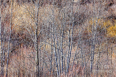 Brown Winter Forest With Bare Trees Poster by Elena Elisseeva