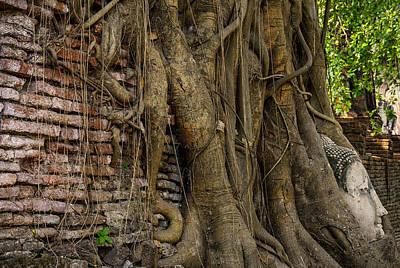 Buddha Head Encased In Tree Roots Poster by Paul W Sharpe Aka Wizard of Wonders
