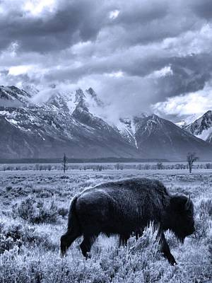 Buffalo And Mountain In Jackson Hole Poster by Dan Sproul