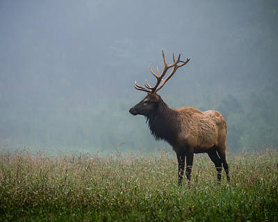 Bull Elk Poster by James Barber
