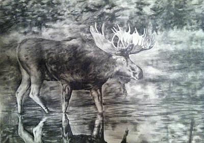 Bull Moose Poster by Shannon  Savage