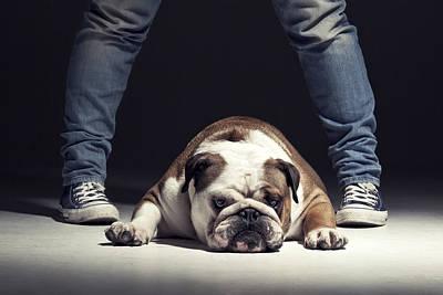 Bulldog Poster by Samuel Whitton
