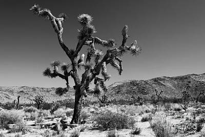 Bullet The Blue Sky - Joshua Tree N.p Poster by Henk Meijer Photography