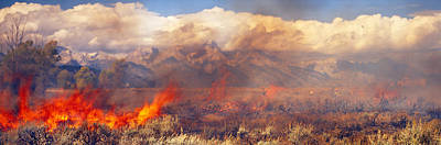 Burning Trees In A Forest With Mountain Poster by Panoramic Images