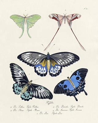 Butterflies I Poster by Splendid Art Prints