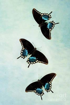 Butterflies In Flight Poster by Stephanie Frey