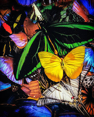 Butterflies Poster by YoPedro