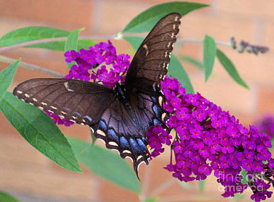 Butterfly And Friend Poster by Luther   Fine Art