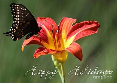 Butterfly And Lily Holiday Card Poster by Sabrina L Ryan