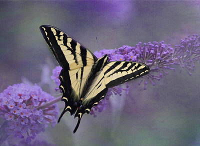 Butterfly Bush Poster by Angie Vogel