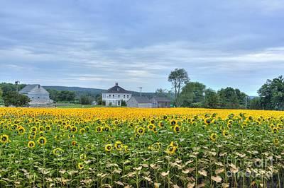 Buttonwood Sunflower Farm Poster by Marcel  J Goetz  Sr