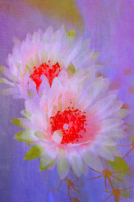 Cactus Morning Bloom Poster by Linda Dunn