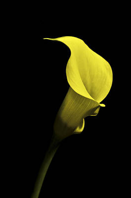 Cala Lilly Vi Poster by Ron White