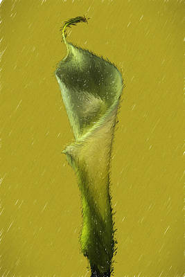 Calla Lily Flower Design Poster by David Haskett