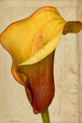 Calla Lily Vintage  Poster by Heidi Smith