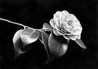 Camellia Flower In Black And White Poster by Jennie Marie Schell