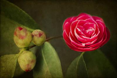 Camellia Poster by Rebecca Cozart
