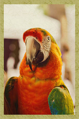 Camelot Macaw Poster by Kae Cheatham