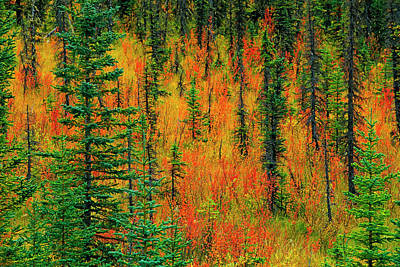Canada, Alberta Autumn In A Meadow Poster by Jaynes Gallery