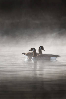 Canada Geese In The Fog Poster by Bill Wakeley