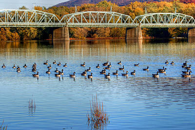 Canadian Geese Flock To The Old Arch Street Bridge  Poster by Gene Walls