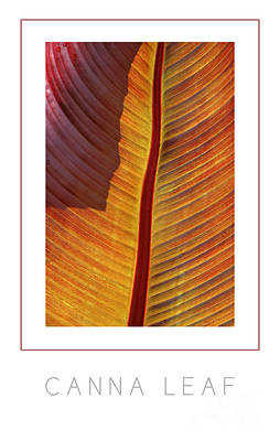 Canna Leaf Poster Poster by Mike Nellums