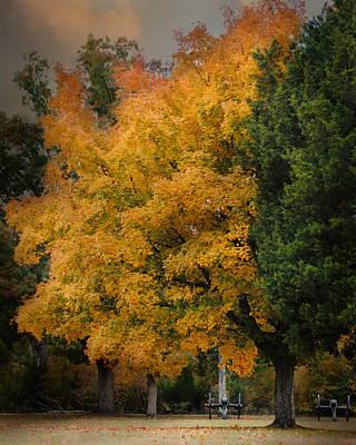 Cannon Under The Golden Tree - Autumn Scene Poster by Jai Johnson