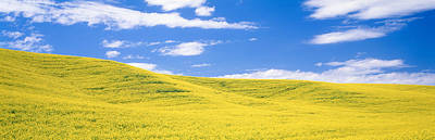 Canola Fields, Washington State, Usa Poster by Panoramic Images