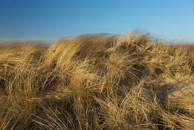 Cape Cod Dune Grass Poster by Allan Morrison