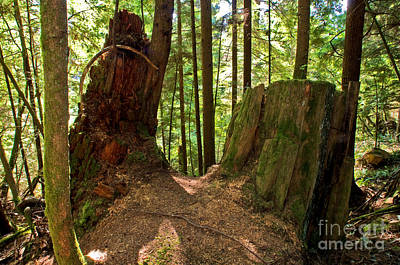 Capilano River Canyon 2 Poster by Terry Elniski