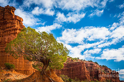 Caprock Canyon Tree Poster by Inge Johnsson