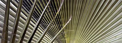 Captivation - Palm Leaf Poster by Ben and Raisa Gertsberg